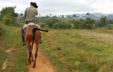 O femeie a sunat la 112, după ce i-a fost furat calul din gospodărie. SURPRIZĂ cine era hoțul