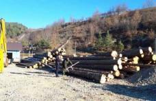 Amenzi drastice primite de patronii unei firme care făcea afaceri ilegale cu lemne