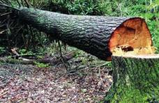 Bărbat din Leorda în stare gravă la spital după ce un copac s-a prăbușit peste el