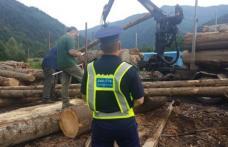 Inspectorii de la Garda Forestieră au stricat businessul unor comercianți de material lemnos din Hilişeu-Horia şi Pomârla