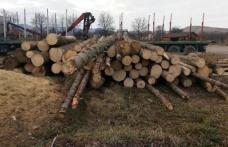 Lemn confiscat și amendă de 5.000 lei pentru o firmă din Dorohoi