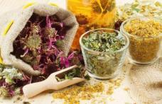Trei plante care te ajută să-ţi reglezi tensiunea