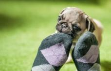 Boala pe care o detectează câinii