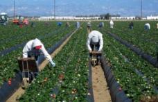 900 locuri de muncă în domeniul agricol - recoltare fructe - în Spania prin intermediul Reţelei EURES ROMÂNIA