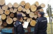 Amendă usturătoare și material lemnos pe care îi transporta fără acte confiscat