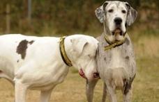 Caz incredibil: Un câine îşi însoţeşte pretutindeni prietenul orb
