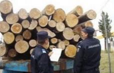 Amendă de 3.000 de lei şi material lemnos confiscat, pentru nereguli la regimul silvic