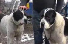 Trei tineri reţinuţi după ce au furat opt câini din rasa ciobănesc