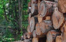 """Anunț privind organizarea licitației de masă lemnoasă pe picior și masă lemnoasă fasonată gorun de către Liceul Teoretic """"Anastasie Bașotă"""" Pomârla"""