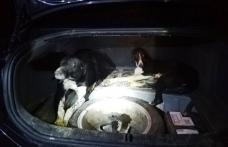 Vânătoare ilegală cu ogari într-o pădure din zona comunei Șendriceni oprită de jandarmi