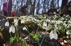 Vremea se încălzeşte în weekend. Cum va fi prima săptămână din martie!