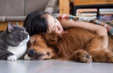 Se pot infecta pisicile şi câinii cu noul coronavirus? Ce au descoperit oamenii de ştiinţă
