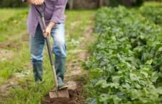 E trădare națională! Guvernul Orban, călăul agriculturii românești, pune la pământ fermierii români și lasă populația fără hrană! PNL a dat verde la p