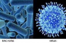 Diferențele dintre viruși și bacterii