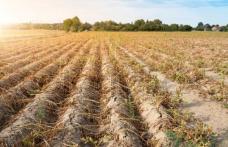 """Comunicat de presă: """"SECETA aduce pierderi, STATUL trebuie să susțină fermierii!!"""""""