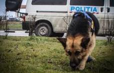 Zeci de polițiști mobilizați noaptea trecută pentru căutarea a doi copii din Dersca