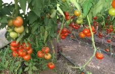 ALDE Botoșani susține menținerea subvențiilor în agricultură