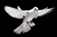 Mesaj de condoleanțe al președintelui CJ Botoșani