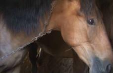 Rănirea sau schingiuirea animalelor este pedepsită prin lege. Bărbat cercetat pentru că agresa un cal