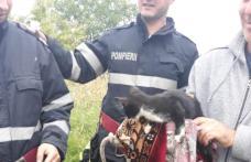 Pisică salvată de pompierii din Dorohoi după ce a căzut într-o fântână adâncă de 13 metri – FOTO