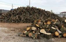 Material lemnos confiscat de la o societate din comuna Mihai Eminescu