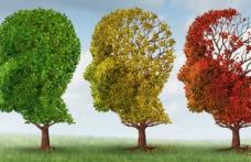 Plante care îmbunătăţesc memoria
