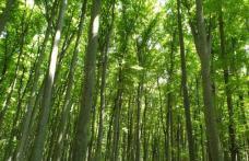 Tragedie la Ibănești! Un bărbat a murit după ce a fost strivit de un copac