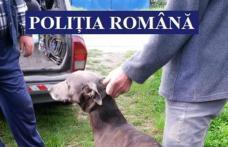 Acțiune pentru protecția vânatului terminată cu reținerea unui câine din rasa ogar