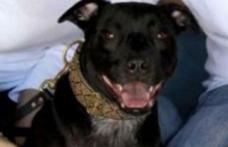 Câinele le-a mâncat 1.000 de dolari şi i-a lăsat cu rata la bancă neplătită!