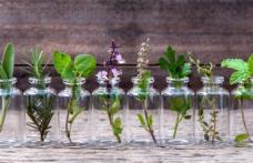 Plante care alungă durerea de cap