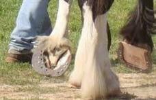 Caz incredibil lângă Dorohoi. Bărbat găsit inconștient după ce a fost lovit de propriul cal