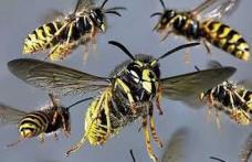 Tânăr botoșănean ajuns la spital în stare gravă după ce a fost atacat de viespi