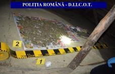Un kilogram de cannabis, descoperit în urma unor percheziții în orașul Darabani - FOTO