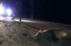 Mașină distrusă și o persoană accidentată din cauza unui porc mistreț