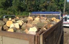 Patron amendat pentru activități ilegale cu material lemnos