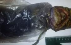 Şocant: O femeie ar fi ţinut un extraterestru în frigiderul ei timp de doi ani