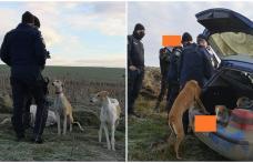Braconieri amendați de jandarmi pentru vânătoare cu ogari - FOTO
