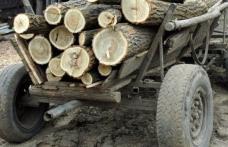 Prinşi la furat lemne pe malul Prutului