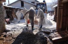 Pesta porcină africană a fost confirmată într-o gospodărie din județul Botoșani - FOTO