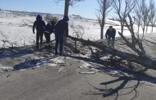 Pompieri voluntari blocați de un copac căzut în mijlocul drumului în timp ce mergeau la un incendiu