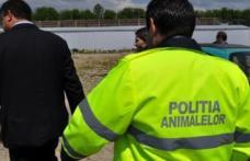 Atribuțiile polițiștilor din cadrul Poliției pentru Protecția Animalelor