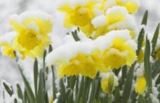 Se strică vremea în România! S-a emis cod galben de ninsori. Alertă meteo ANM