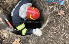 Pompierii dorohoieni eroi pentru necuvântătoare: Câine salvat dintr-un canal - FOTO