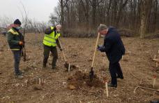 """Prefectul Dan Nechifor a dat startul """"Lunii plantării arborilor"""" - FOTO"""