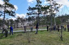 Primăria Dorohoi anunță o nouă acțiune de plantare a arborilor