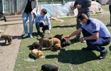 Zece căței abandonați salvați de Polițiștii din cadrul Biroului de Protecție a Animalelor - FOTO