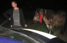 Au luat calul unui bătrân de 84 de ani, dar au dat nas în nas cu poliţiştii de frontieră