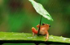 Meteorologii au anunțat când scăpăm de ploi. Prognoza meteo 1 - 14 iunie