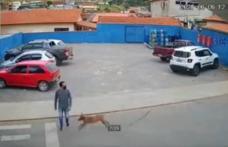De-a râsul-plânsul! Tânăr lovit pe trecerea de pietoni de un câine care alerga - VIDEO