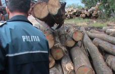 Material lemnos de peste 10000 lei confiscat de polițiști